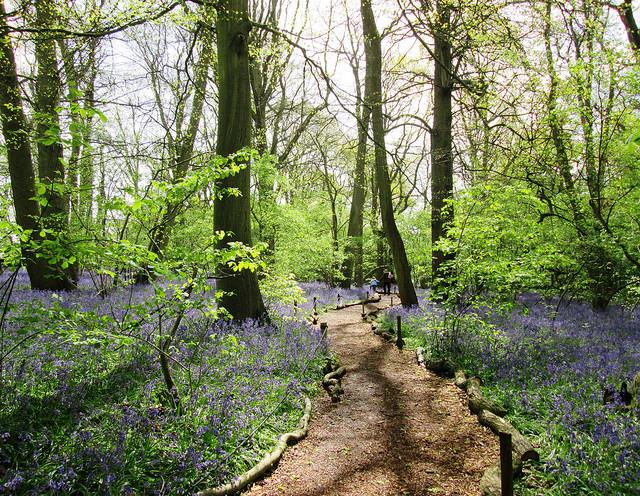 Path in Little Wix Wood 3   by Leimenide   CC 2.0