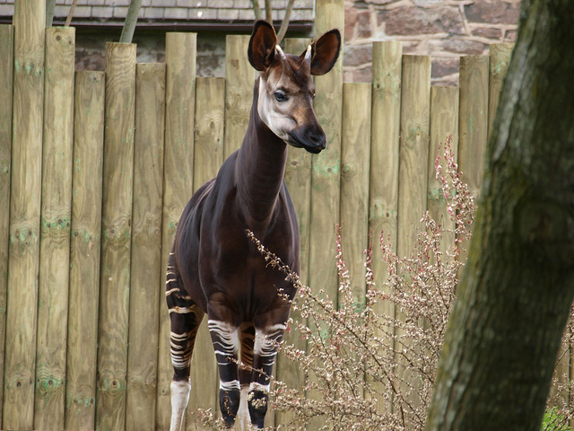 Chester Zoo by Migel Swales | CC 2.0