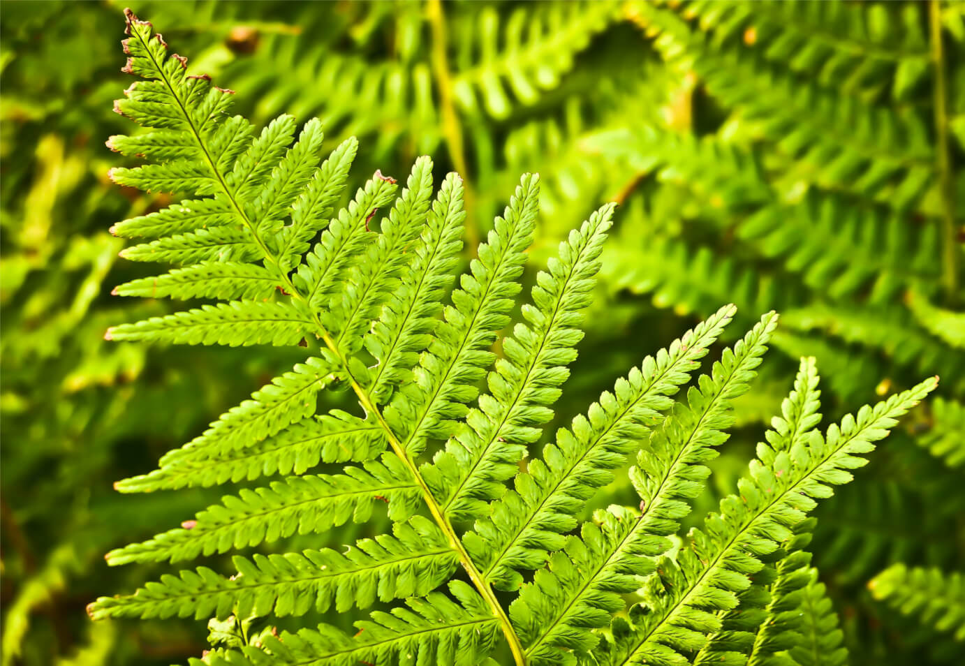 fern-nature-green-plant-1