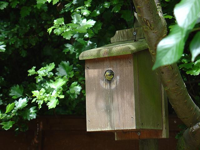 nest box