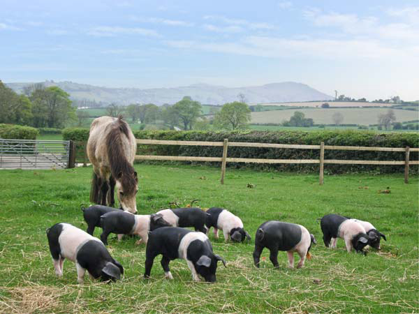 Holiday cottage with farm animals