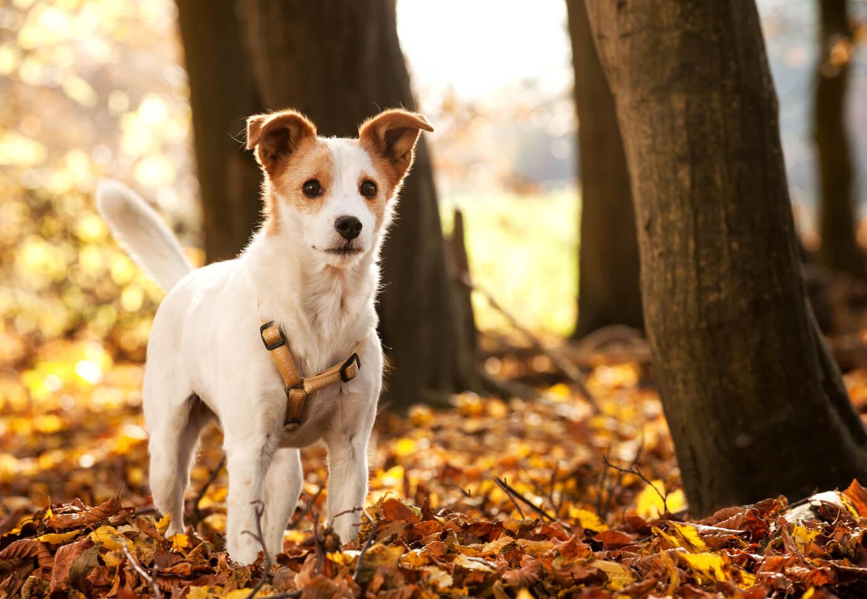 dog-shutterstock_160812599-1