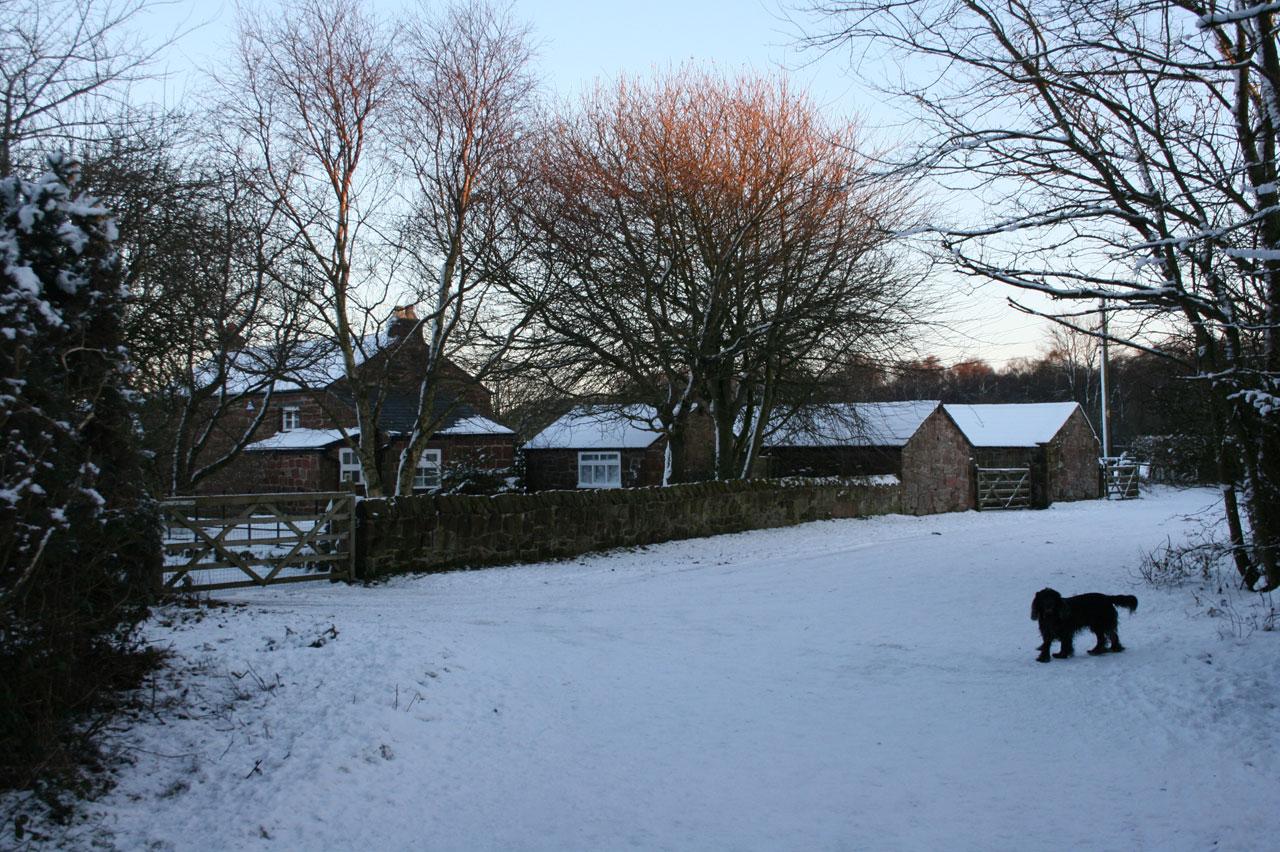 black-dog-in-snow