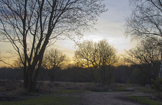 Epping Forest by Chiron3636 - CC 2.0