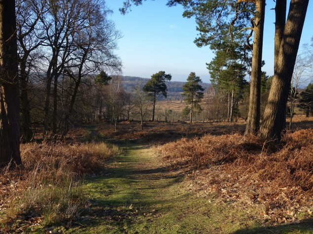 Ashdown Forest Walk