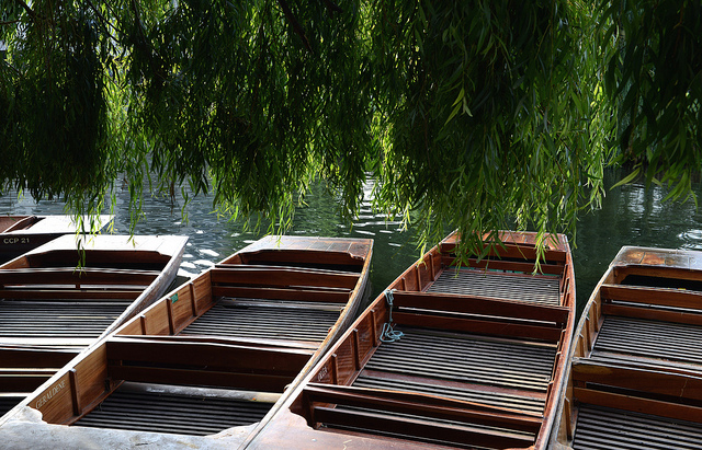 Punts in Cambridge