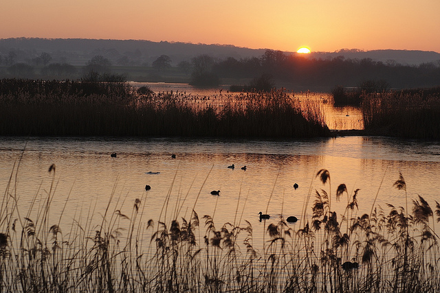 Wetlands at Shapwick in Somerset at dusk