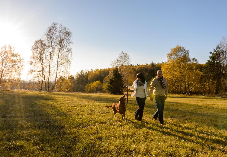 couple-walking-dog-shutterstock_218805241-1