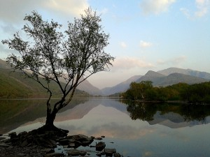 Silhouette of a lonely tree infront of a reflective lake with mountains and blue sky