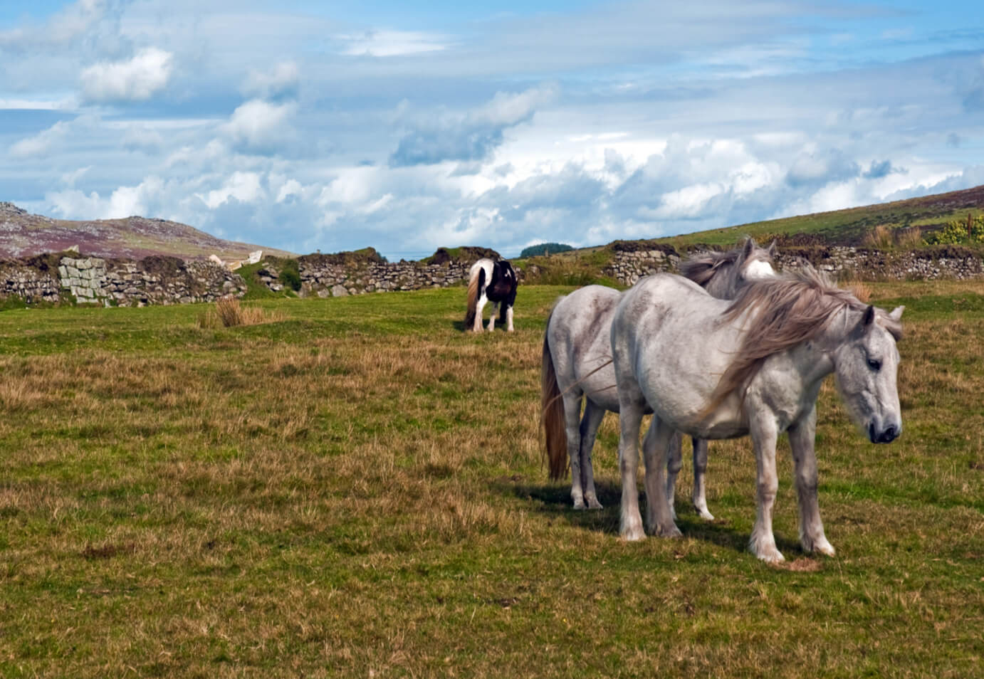 a_walk_on_bodmin_moor_cornwall_3_30_sept-_2010_-_flickr_-_phillipc