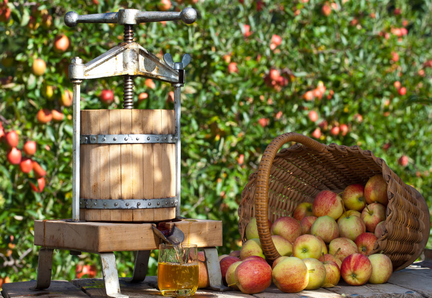 cider-apples-shutterstock_65553892-1