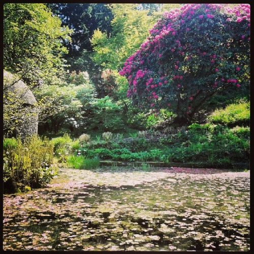 Cotehele Gardens by Jono Taylor is licensed under CC BY-ND 2.0