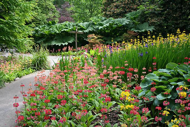 Swansea,_Clyne_Gardens_-_geograph.org.uk_-_185421