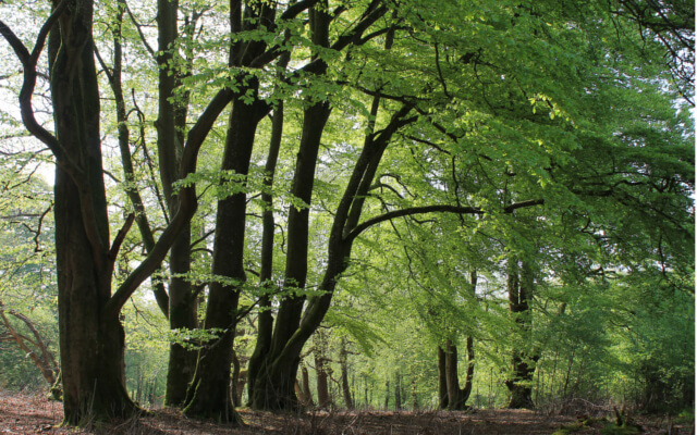 Dog friendly walks in dorset - Thomas Hardy Egdon Heath - Thorncombe Woods
